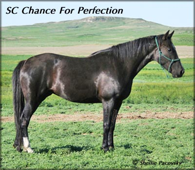 SC CHANCE FOR PERFECTION #20401253