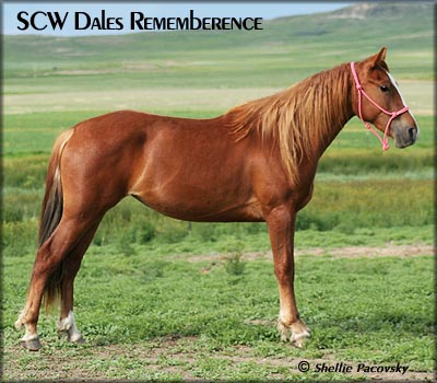 SCW DALES REMEMBERENCE #20700736