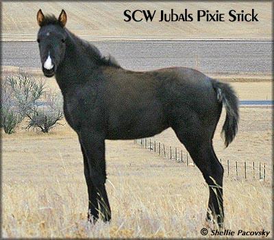 SCW JUBALS PIXIE STICK TWHBEA #20903143